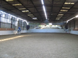 2 greys by Dimaggio working in the indoor school