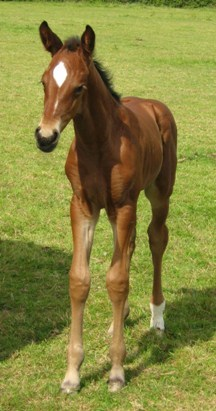 Deosita's 2009 filly by Imperio